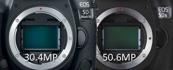 Canon 5D4 vs 5DS