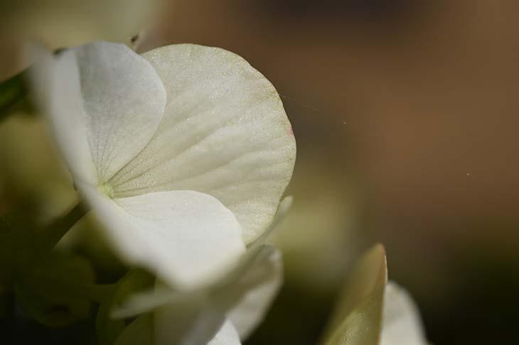 Nikon D5600 Sample Images « NEW CAMERA