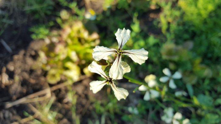 tree-nature-grass-blossom-plant-leaf-601103-pxhere.com_optimized