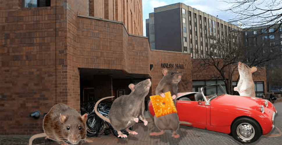 Rats in Walsh Lose Housing For Being in 8-Man Without Mask