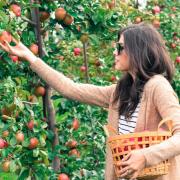 REPORT: Sarah Went Apple Picking