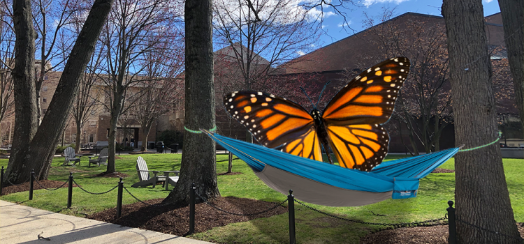 Senior Falls Asleep In Hammock, Awakens As Butterfly