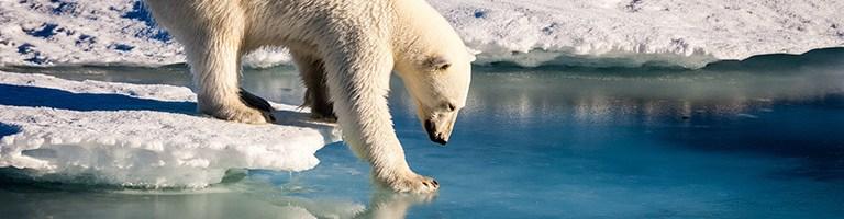 Cambiamento Climatico: i Rischi Per Il XXI Secolo