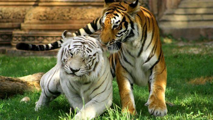 [Analysis] Hong Kong vs Singapore: Competing Asian Tigers