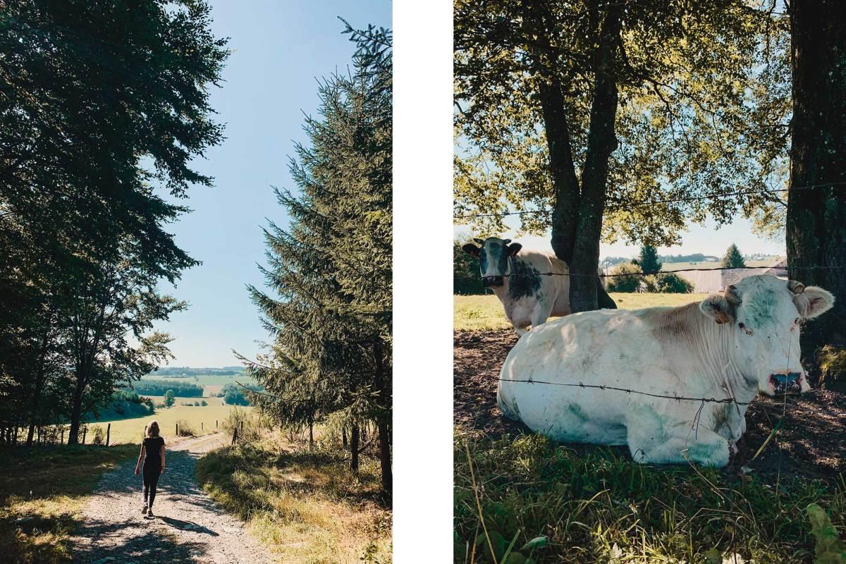 Wandelen in de heuvels van de Ardennen