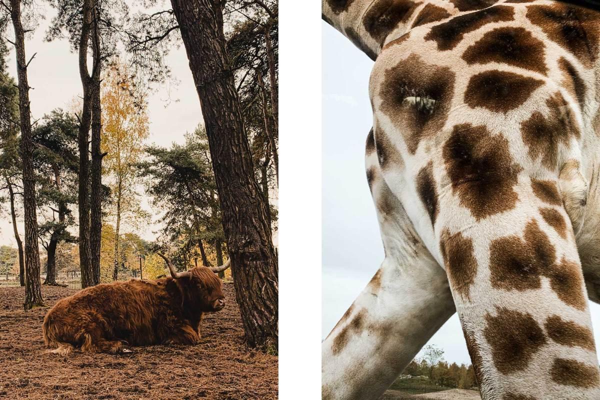 Safaripark Beekse Bergen vakantie