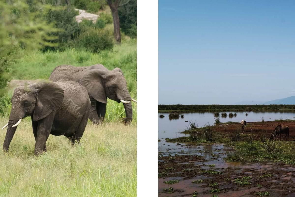 De big five tijdens safari Tanzania