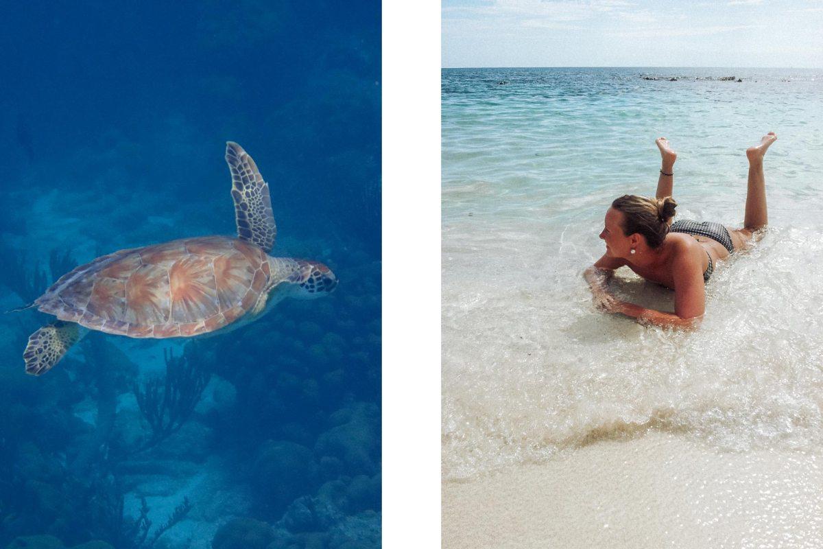 Snorkelen en duiken in Bonaire