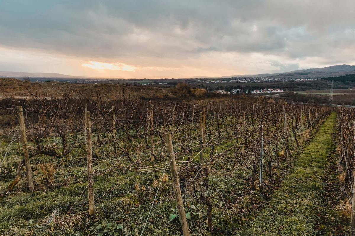 Hiken tussen de wijngaarden in Eltville