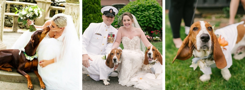 Ever wondered what to do with your pet during the wedding? We have the answer.
