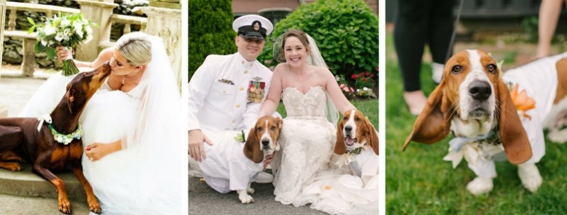Dog Watcher Service For Your Wedding on The Newport Bride