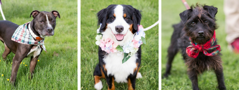 5 Easy Ways to Dress Your Pet For A Wedding