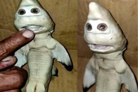 https://thenewse.com/wp-content/uploads/Strange-creatures.jpg