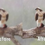 IIT Madras team have created a new way to restore blurred photos