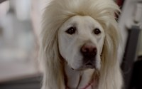 Subaru Dog Commercials  Bad Hair Day | The News Wheel