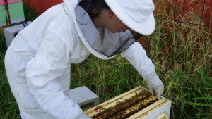 beekeeper looks into her hive box