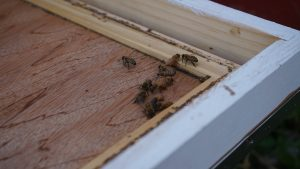 bees close up at the edge of a box