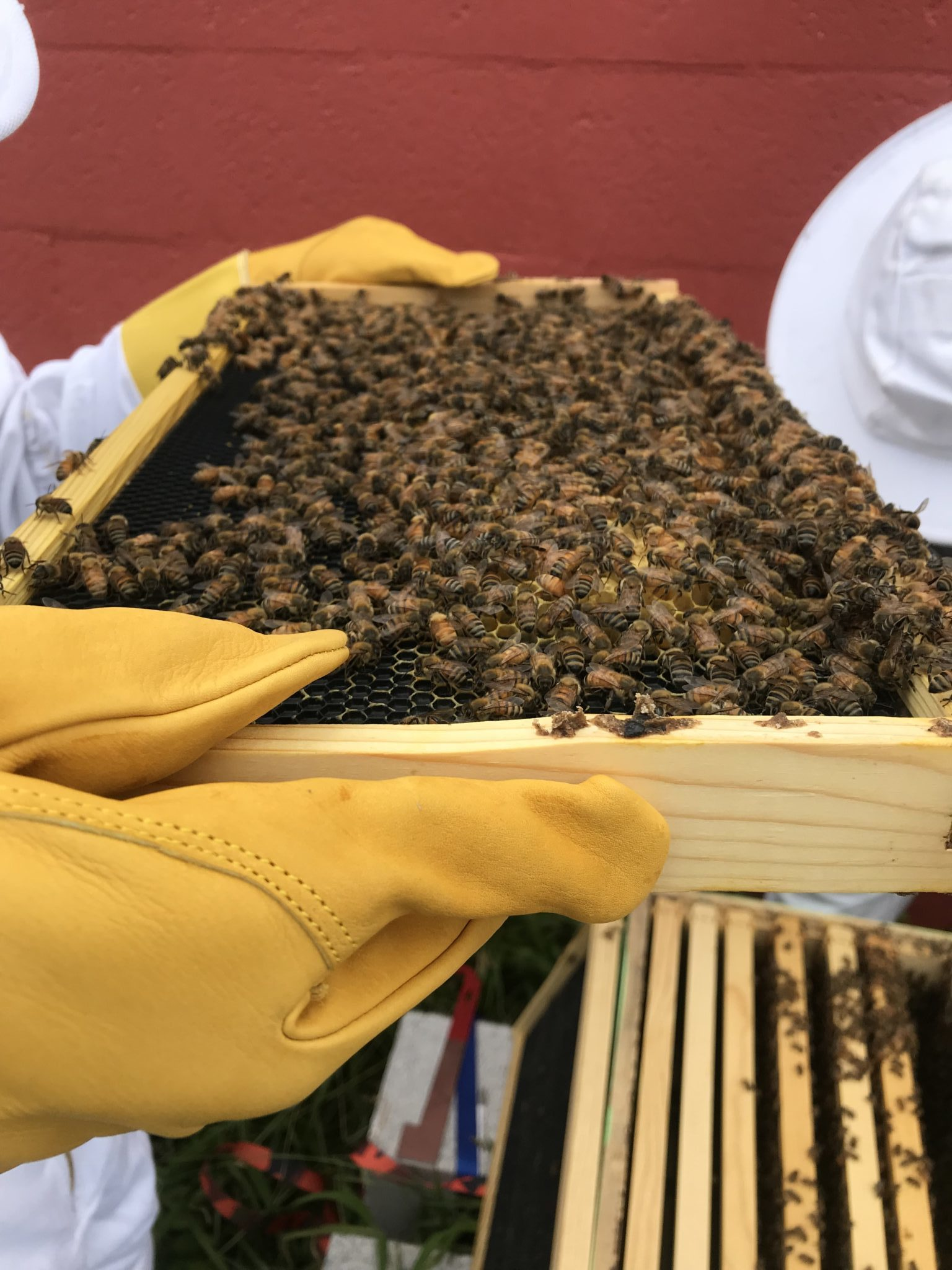 frame of bees with a yellow glove