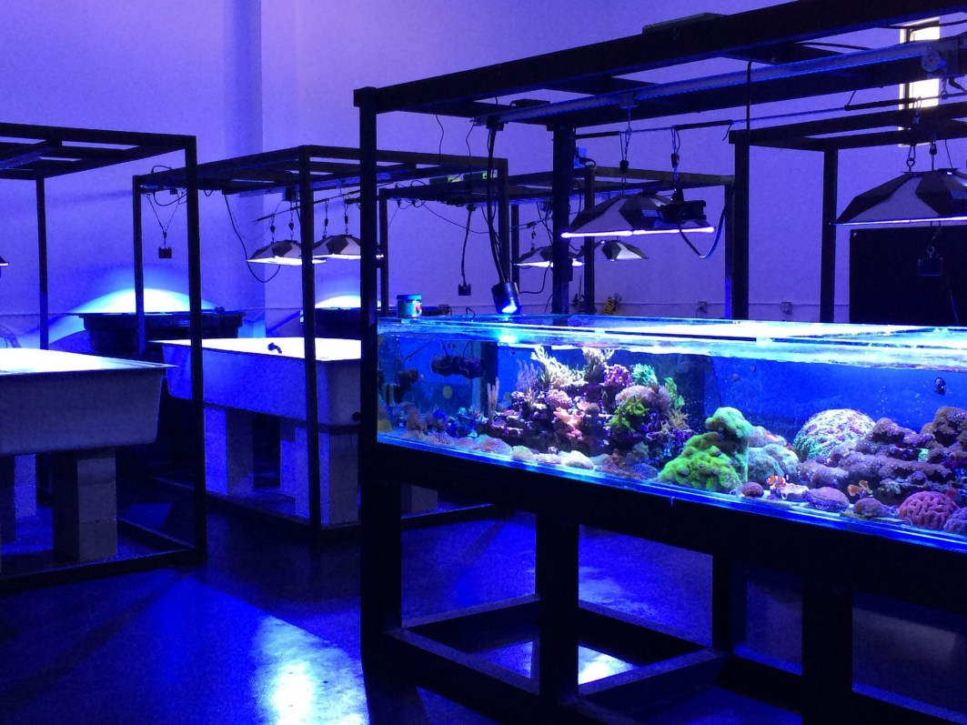 The Coral Morphologic lab.