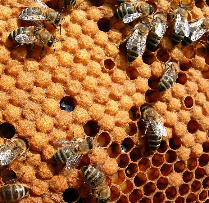 Bees in their honeycomb. (Courtesy of Keez Beez)