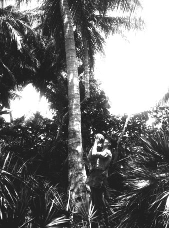Drinking coconut water in 1916. (Courtesy of State Archives of Florida, Florida Memory)