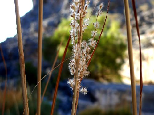 Flowers in an Omani Wadi