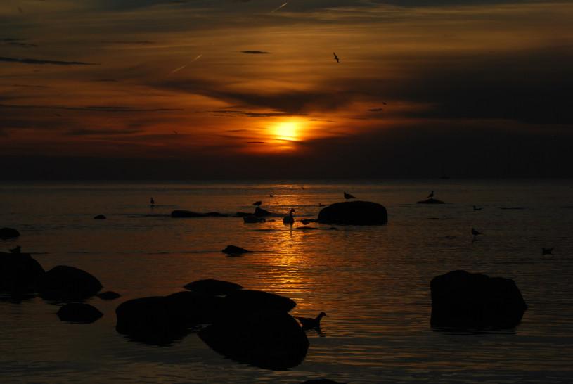 Matus Seci - Walking Gotland