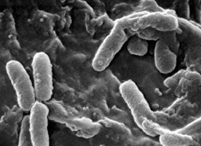 anti-smoking-anti-nicotine-bacteria