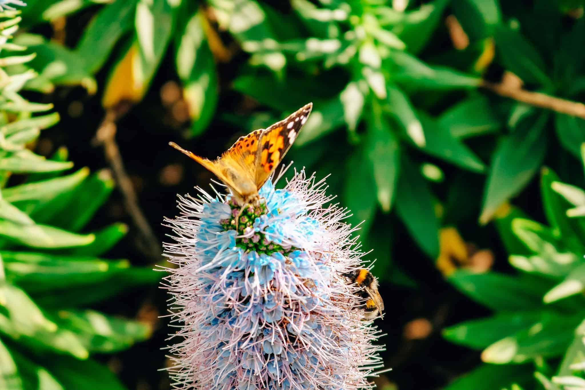 Top 7 Things to do in Madeira-flowers butterfly