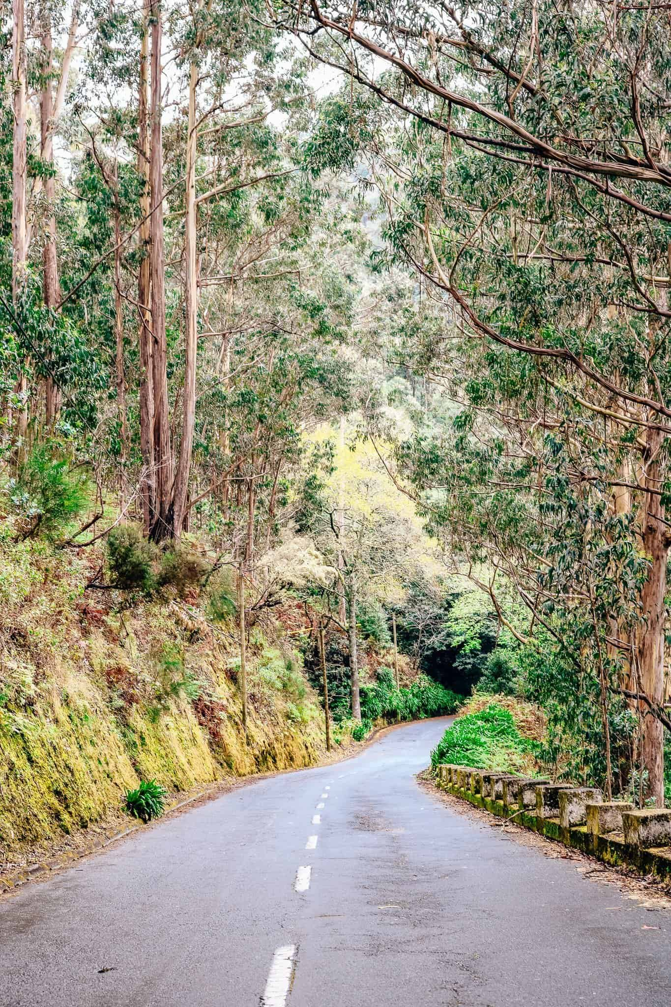 Top 7 Things to do in Madeira-driving in madeira
