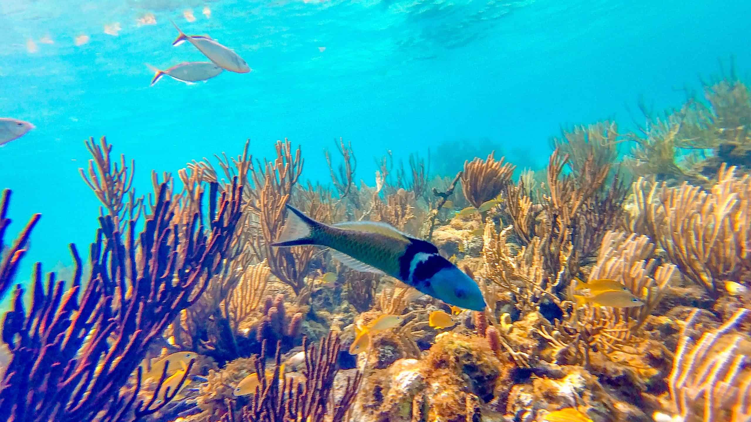Cayman Islands Destination Guide