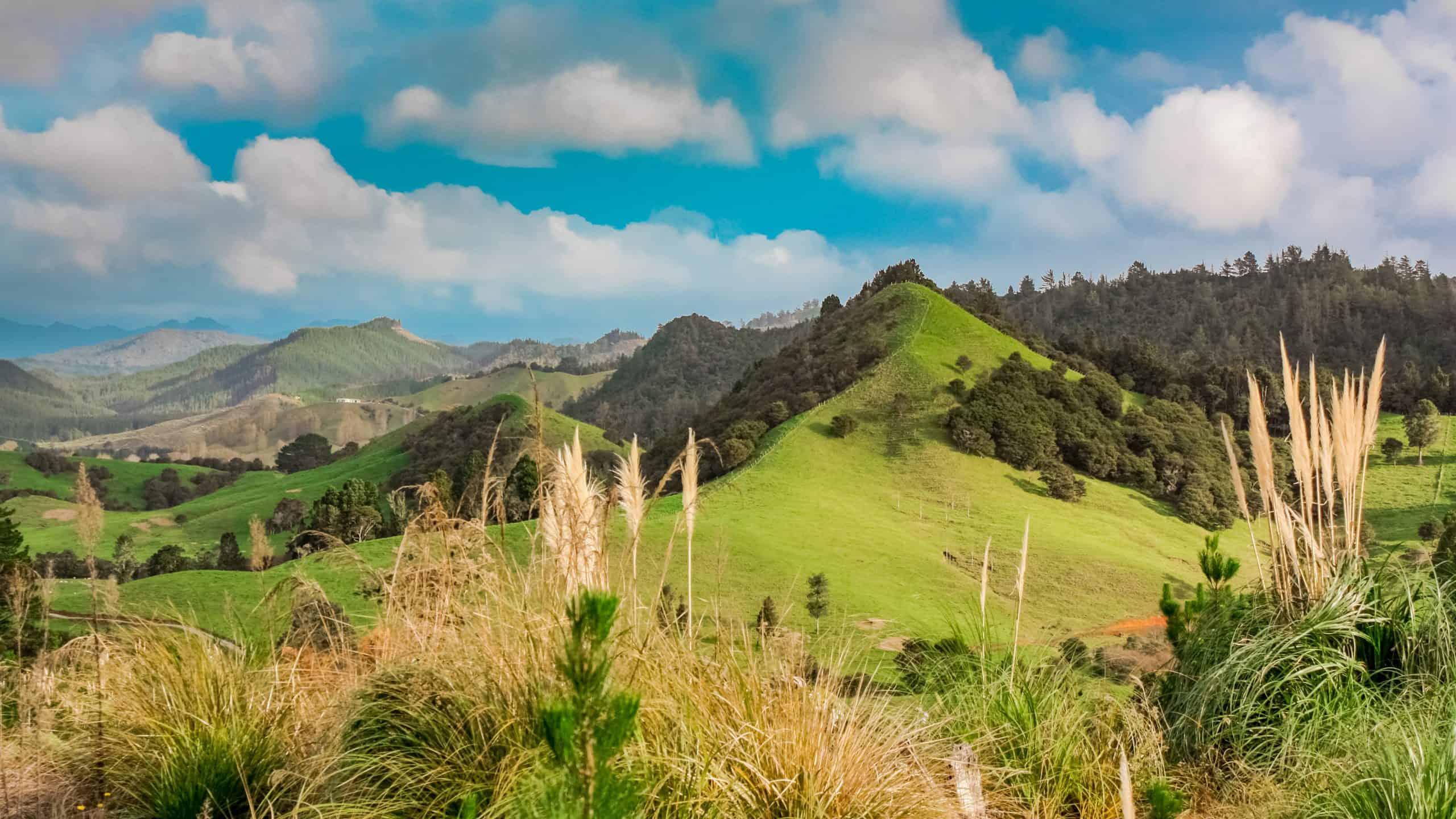 New Zealand Destination Guide
