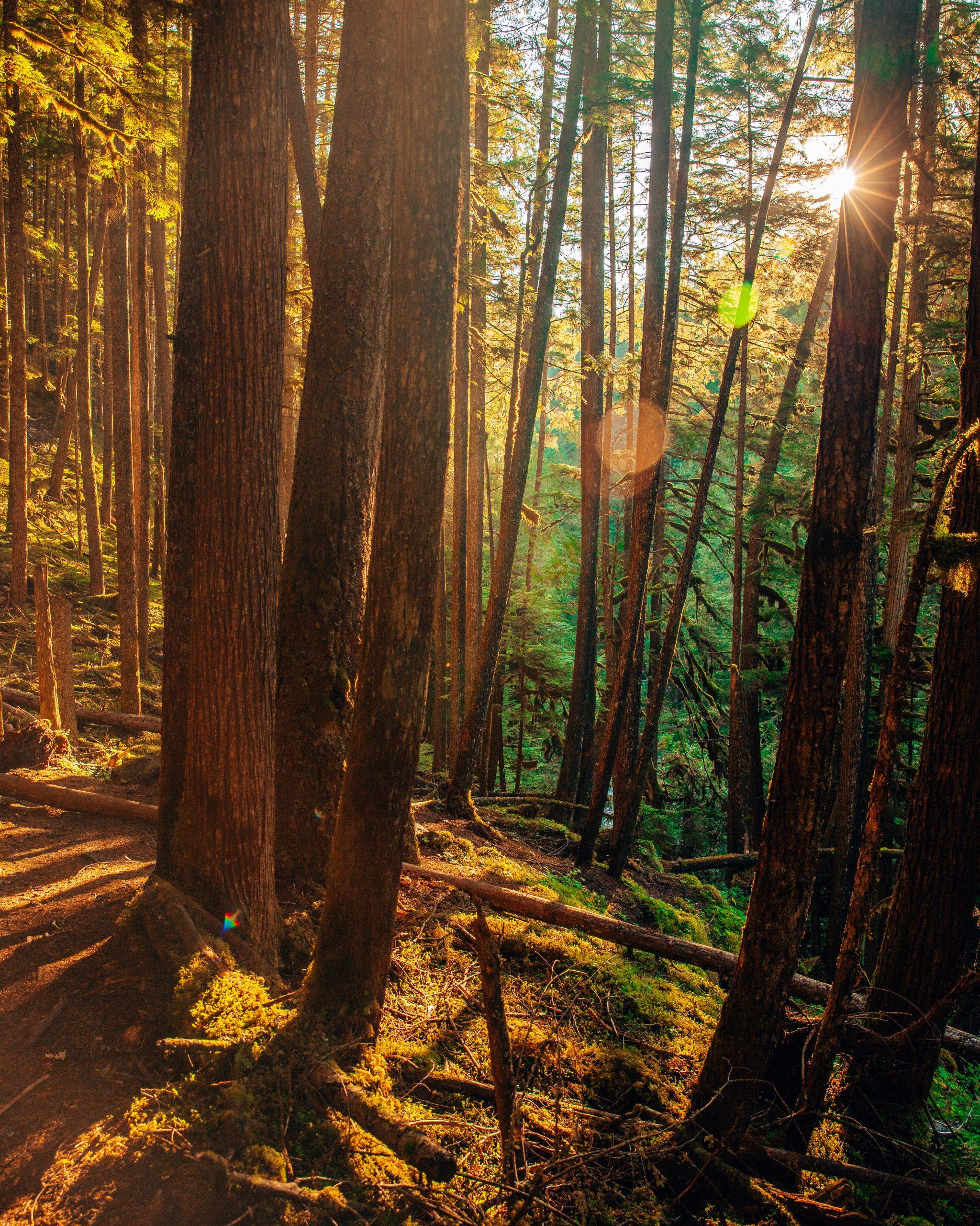 Hike to Willson Creek Falls British Columbia