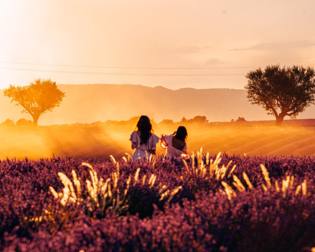 Sunset at Lavender Fields in Provence