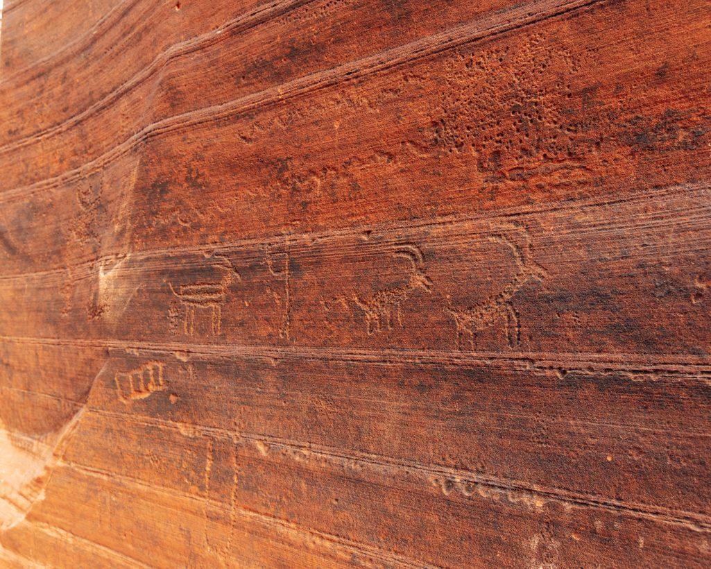 Panel of Big Horn Sheep Petroglyphs at Buckskin Gulch Utah