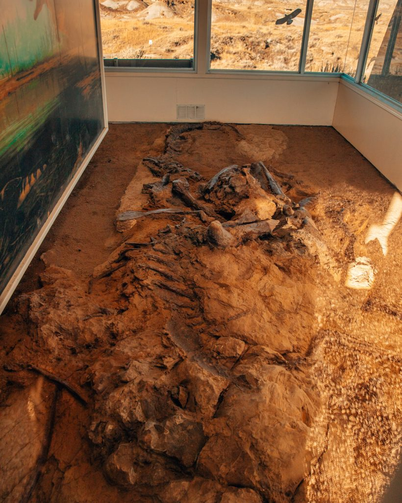 Dinosaur Fossils at Dinosaur Provincial Park Alberta