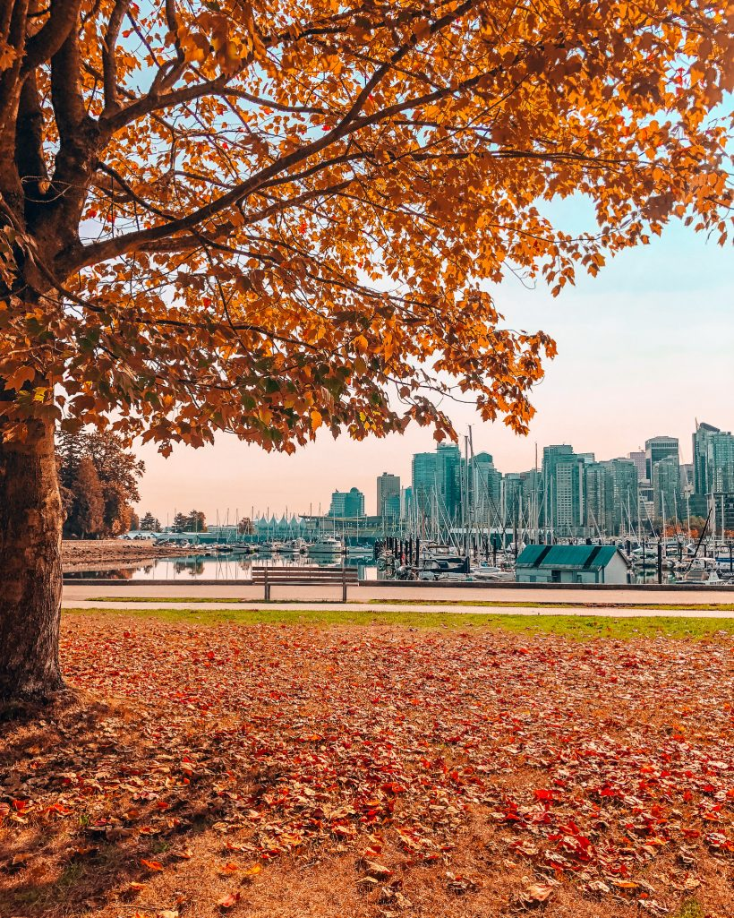 View of Vancouver Skyline from Stanley Park in Fall