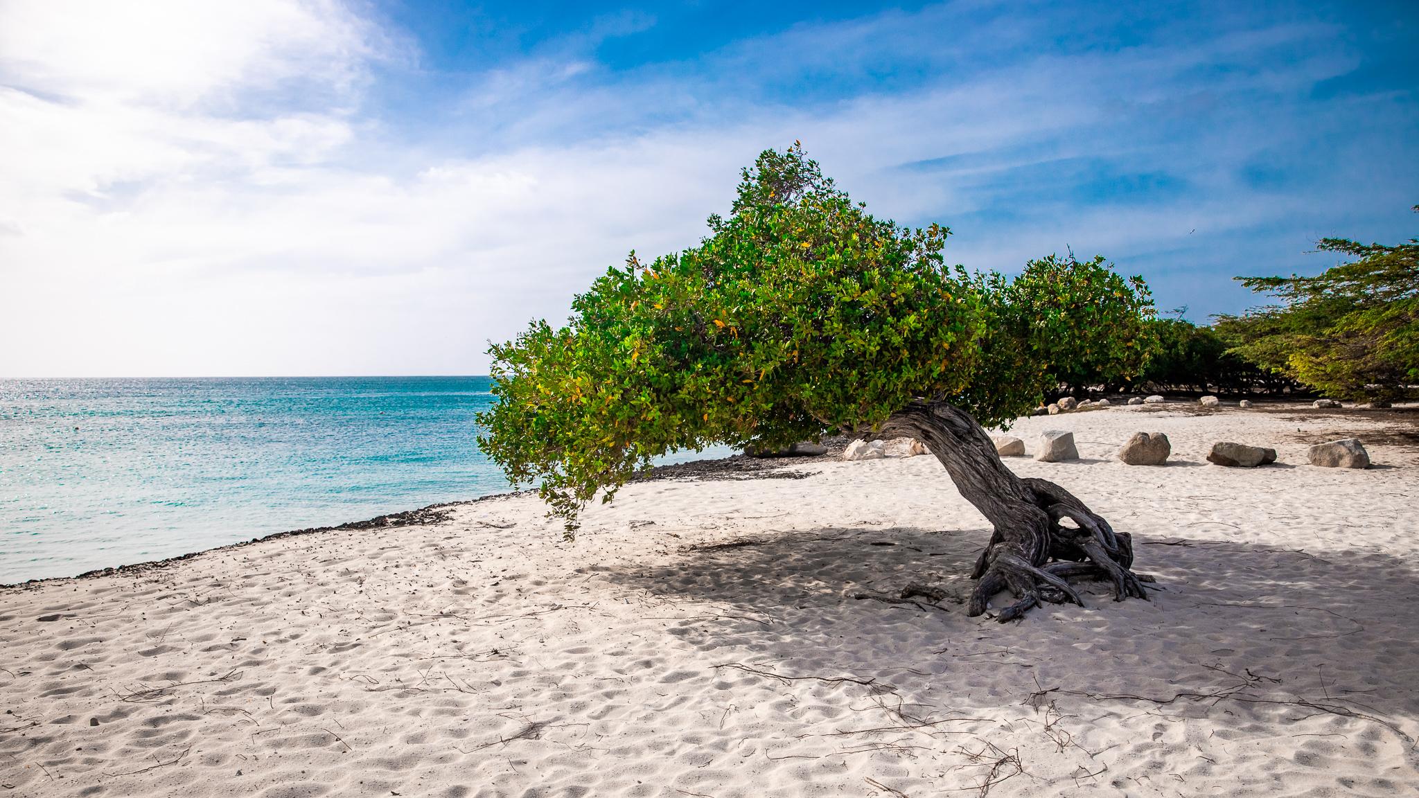 Aruba 3