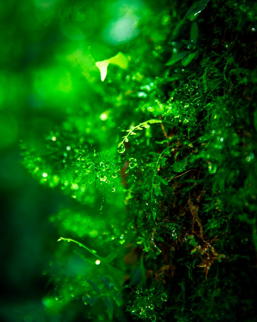 Lush Trees in Manuel Antonio Rain Forest
