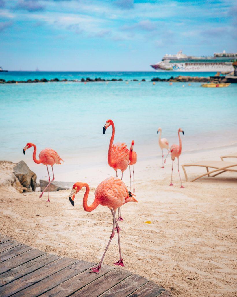Flamingo Island Aruba Flock