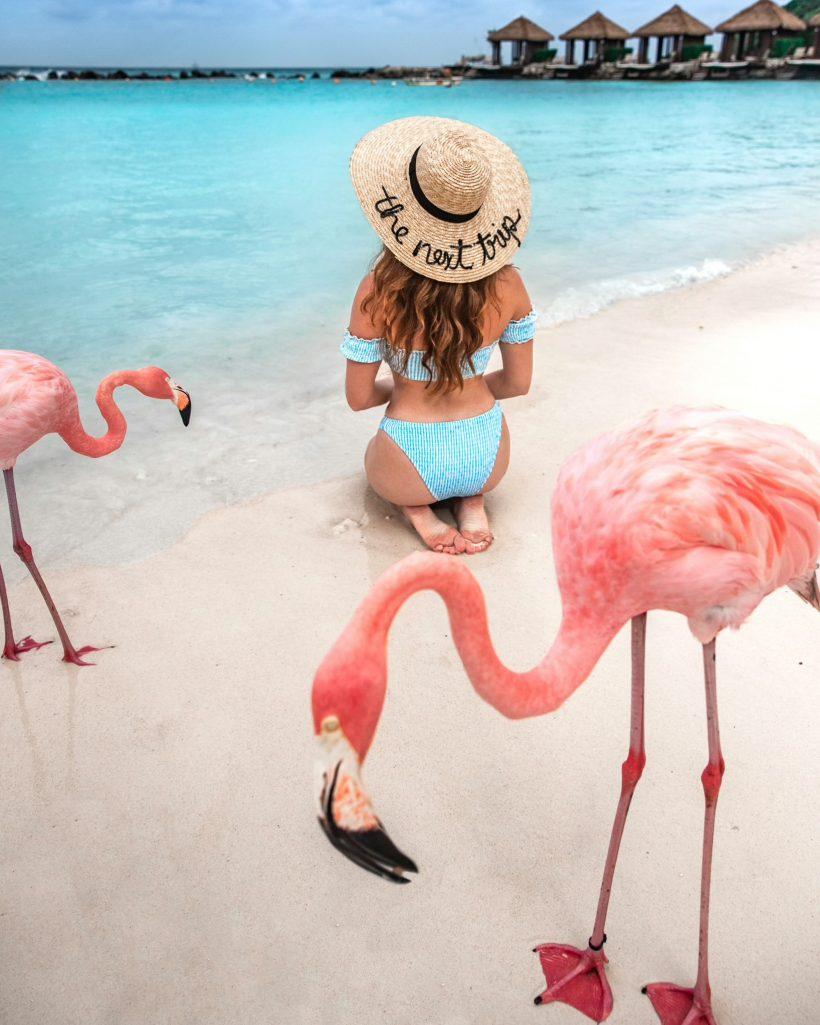 Sitting Among Flamingos on Renaissance Island Aruba