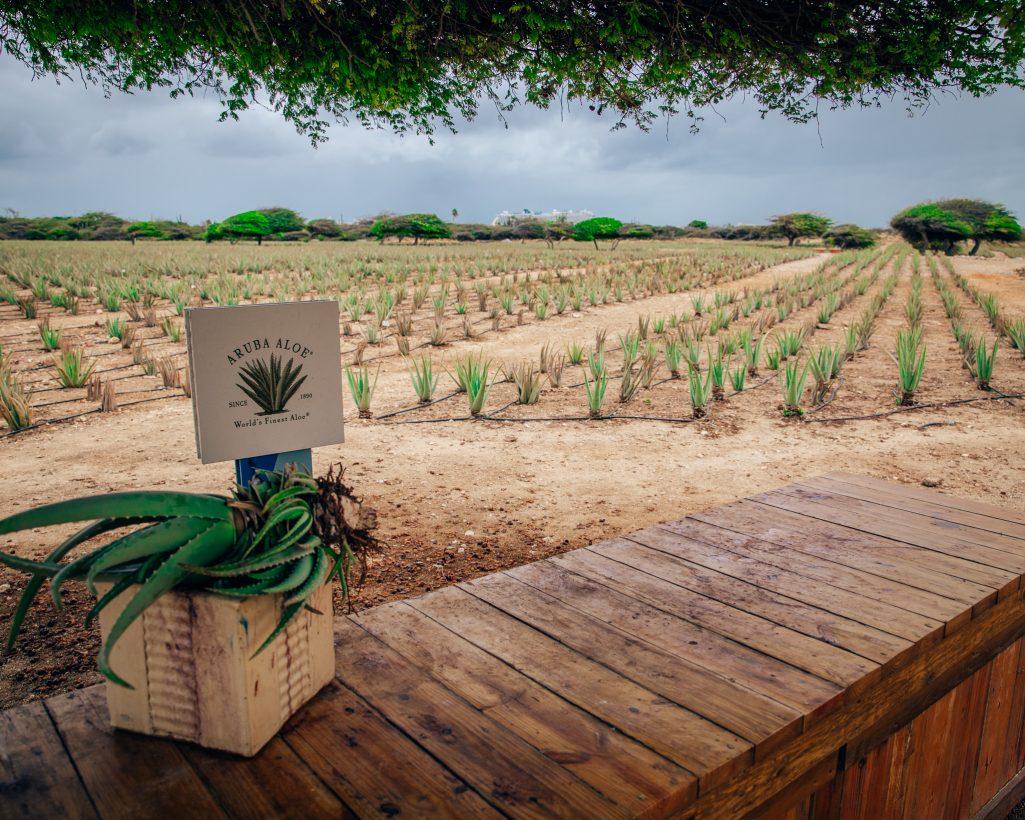 Aruba Aloe Farm Factory