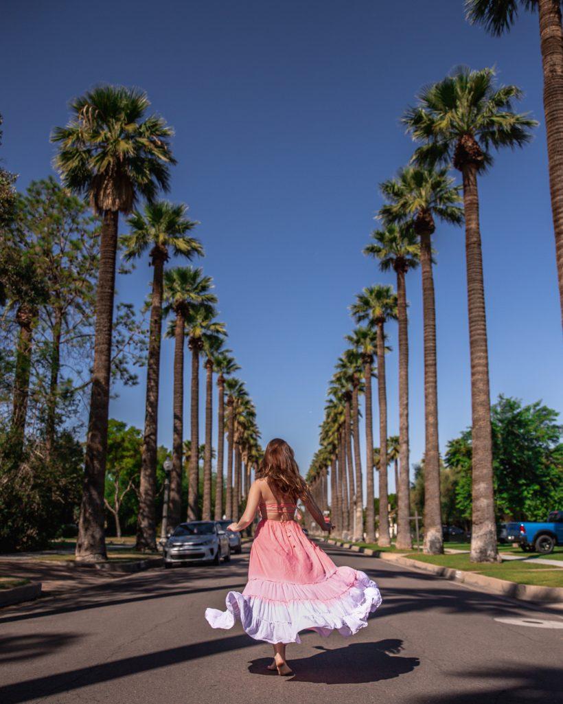 Palm Tree Street Phoenix