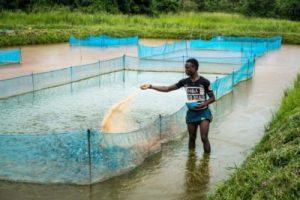 Fish farming in Nigeria