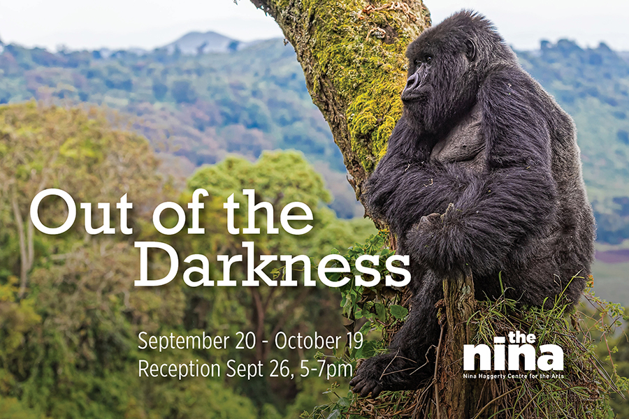 Out of the Darkness | Rob Hislop