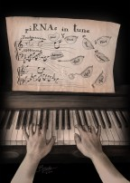A melody played by two hands