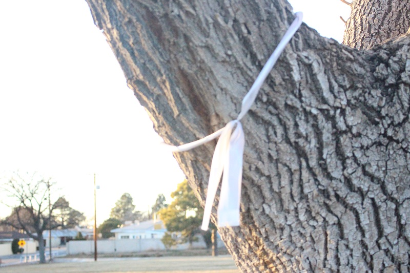 A white ribbon wrapped around the limb of an oak tree.