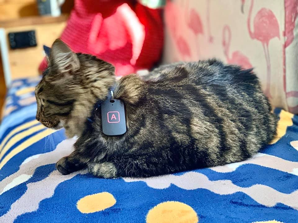 the ultimate cat gps tracker tractive