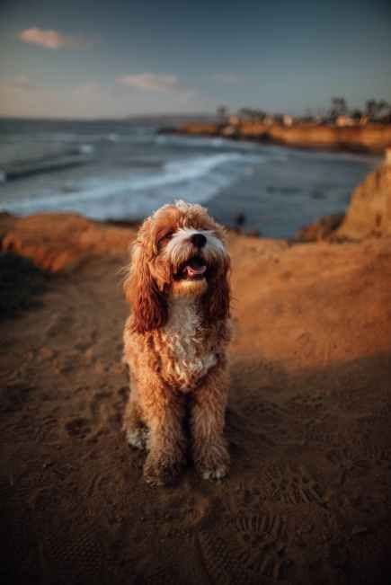 One thing to know when moving to San Diego is that it's very pet friendly.