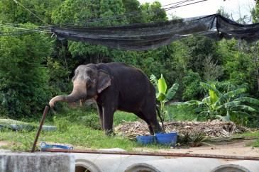 L'elephant, Koh Phangan, Thailand